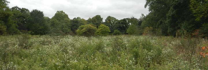 HSP meadow